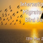Int Migratory Bird Day - 2017