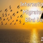 Int Migratory Bird Day - 2017 - no date