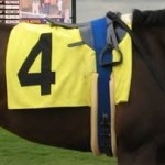 horse numbers