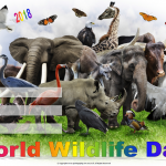 World Wildlife Day - 2018 - fillable