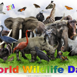 World Wildlife Day - 2018 - no date