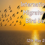 Int Migratory Bird Day - 2018