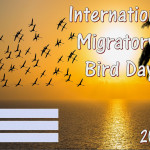 Int Migratory Bird Day - 2018 - fillable
