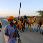 Pushkar, India; a man walking his camels