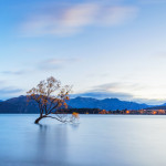 The famous tree at Lake Wanaka in sunrise, South Island of New Zealand