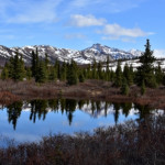 Returning spring beauty reflects in the alpine lakes in the Alaska Range