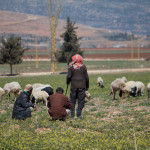 Shepherd and goat herder, Beeka Valley, Lebanon, Middle East