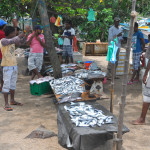 Bentota, Sri Lanka - Group of sellers and customers bargain fresh catched salmon at fish market