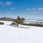 View of Danbury Hill in Hampshire in England in winter with clear blue skies and snow on the ground in beautiful clear weather