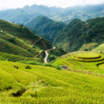 Viewpoint of rice field on terraced landmark of Mu Cang Chai, Yen Bai, Northern Vietnam