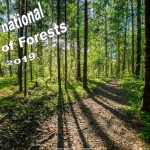Int Day of Forests - 2019 - no date
