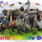 World Wildlife Day   March 3    Event Poster