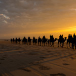 Camels walking at sunset along cable beach Broome in the North West of Western Australia.
