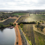 Margaret River vineyard, a beautiful combination of colour and line