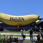 The Big Banana is an iconic site (and recreational park) at Coffs Harbour. Tourist take photo of the Big Banana.