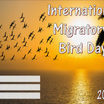 Event Poster - Int Migratory Bird Day - 2020 - fillable