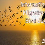Event Poster - Int Migratory Bird Day - 2020 - no date