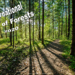Event Poster - Int. Day of Forests - 2020 - no date
